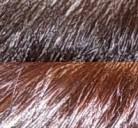 Coloration reflets cuivre-rouge